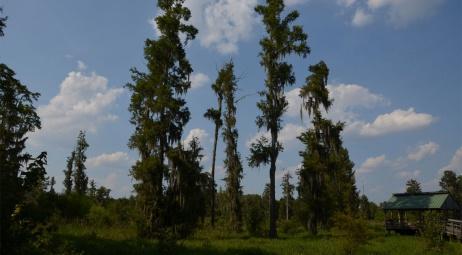 Phinizy Swamp