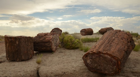 Petrified Forest National Park AZ