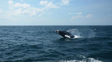 Plymouth MA, balade avec les baleines