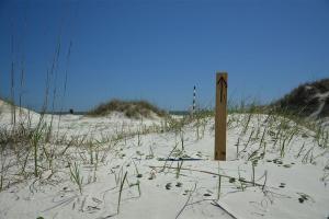 plage sauvage cumberland island