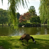 Boston, Public Garden et ses canards
