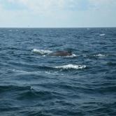 Portland, balade en mer et rencontre avec les baleines